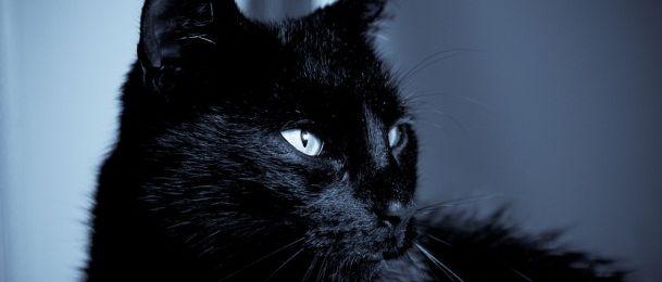 Simbolika crne mačke