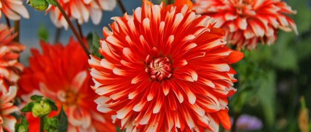 Crvena boja u astrologiji - hrabrost i snaga