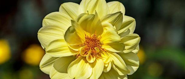 Narančasta i žuta boja u astrologiji - boja Sunčeve energije
