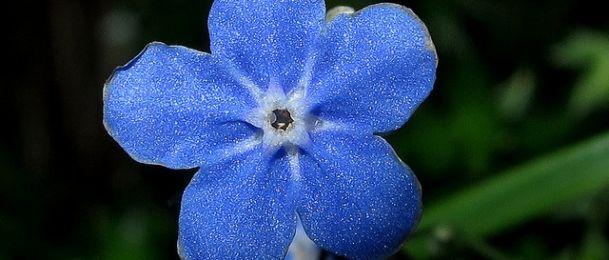 Plava boja u astrologiji - povjerenje i istina