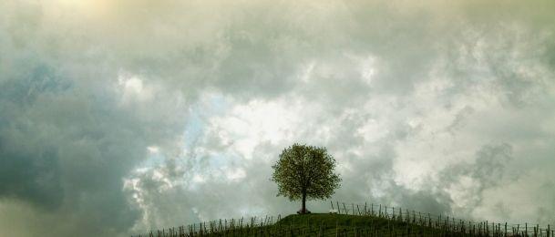 Stabla kroz astrologiju