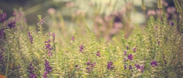 Princip i redoslijed izvođenja radova u vrtu u proljeće