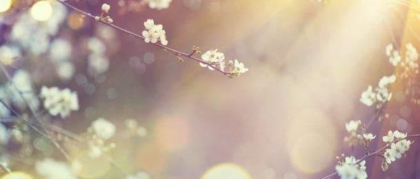 Vrtlarstvo i osjetila - Dodir
