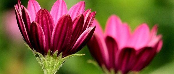Cvijetni zodijak - cvijeće prema horoskopu