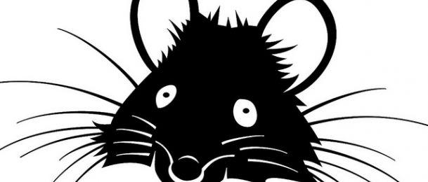 Štakor – značenje štakora u kineskom horoskopu