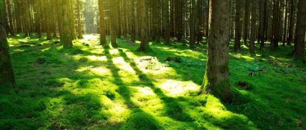 Štetnim utjecajima sunca doskočite dobrom kombinacijom nutrijentima i antioksidansa!