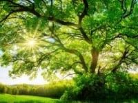 Energija drveta kod djece