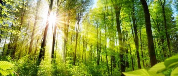Stabla i godišnja doba