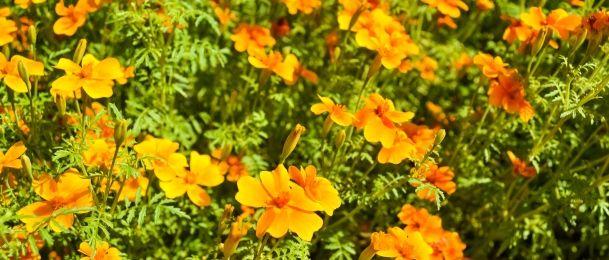 Svaki cvijet nešto znači