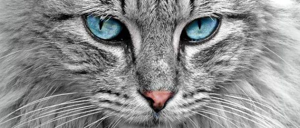 Zašto trebate imati mačku?