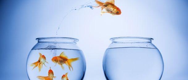 Ribe – uživanje u samoći