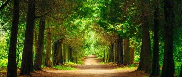 Drveće može liječiti