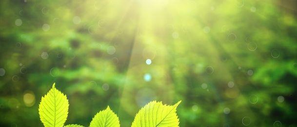 Ljekarna iz naše prirode