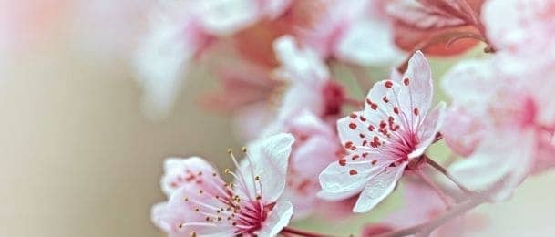 Najpopularnije cvijeće za vjenčanje